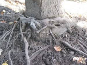 condo- root-2