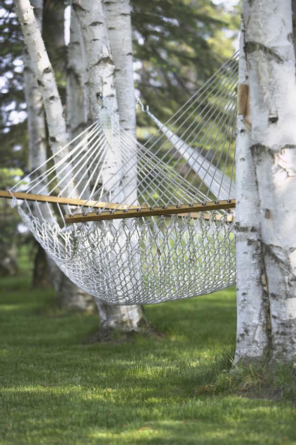 istock birch