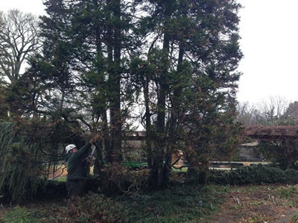 removing cypress
