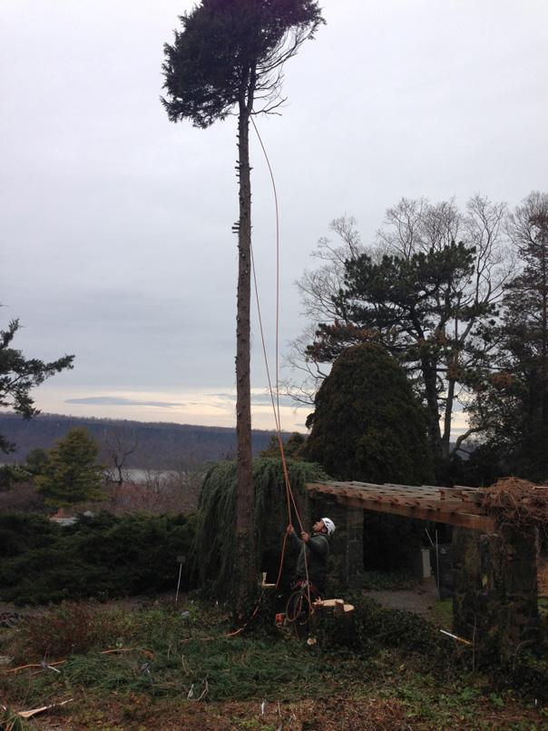 roping cypress