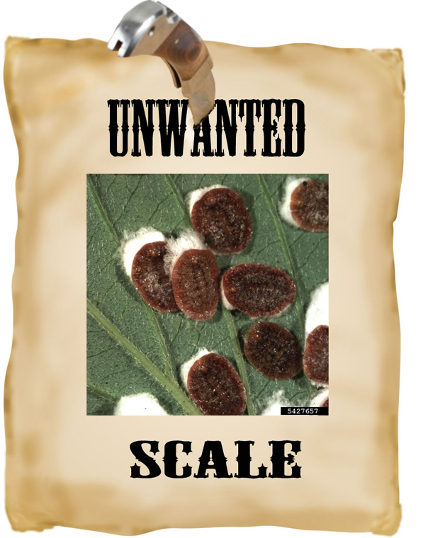 unwanted scale
