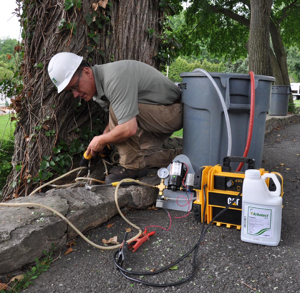 Tree borers amp bark beetles arborx tree health care - One Two